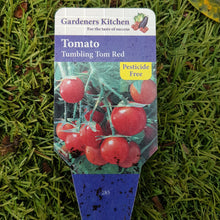 Load image into Gallery viewer, Tomato Bush 'Tumbling Tom Red' 9cm Pot