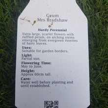 Load image into Gallery viewer, 1ltr Geum 'Mrs Bradshaw'