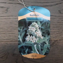Load image into Gallery viewer, 3ltr Buddleja 'Silver Anniversary'