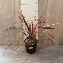 Load image into Gallery viewer, 3ltr Phormium 'Rainbow Maiden'