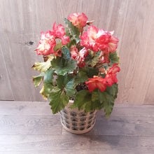 Load image into Gallery viewer, Large Begonia Planter
