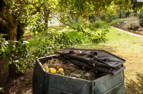 photo of a compost bin with the lid open and compost in it. it is in a green garden under a shady tree