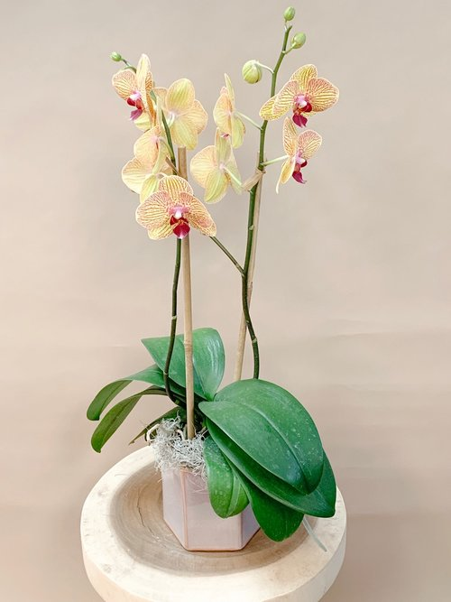 Orchid 1