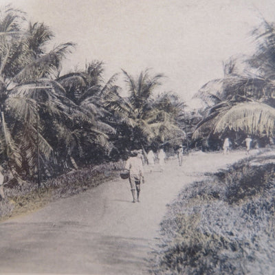 Coconut Farm by Found Art | Found Art | Poster Child Prints
