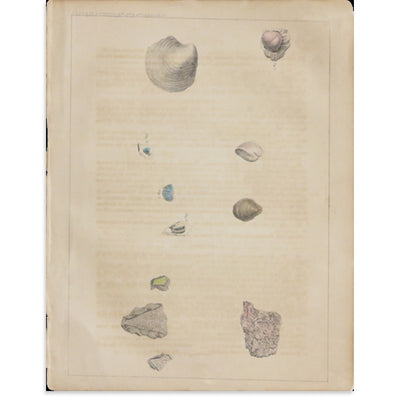 Geology Plate 1 by Found Art | Found Art | Poster Child Prints