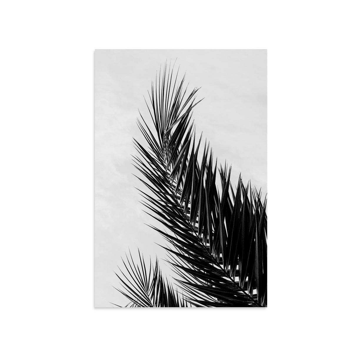 Palm by PCP Collection | Print | Poster Child Prints