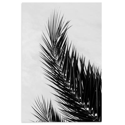 Palm | Photography | Open Edition Prints | Poster Child Prints | Black & White