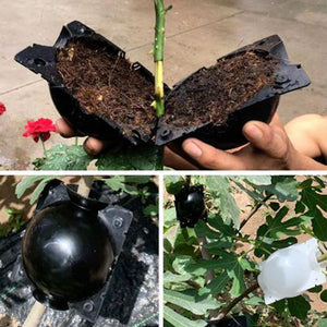 5pcs Plant Root Growing Box 5PCS Ball For Garden 5/8cm In Diameter
