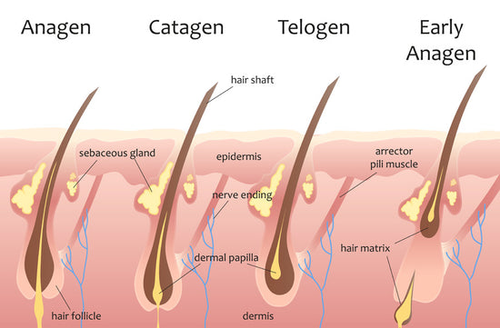 The real science behind hair growth