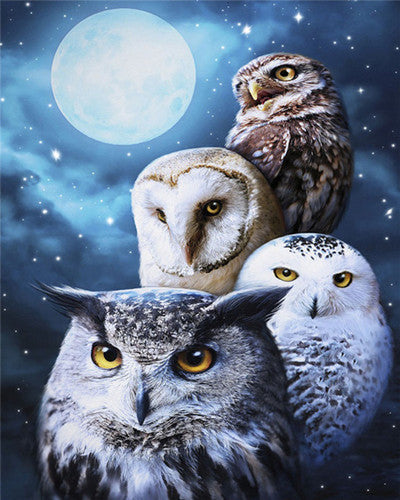 Fly By Night Owls - Artfully Bliss paint by numbers