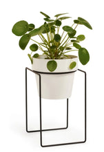 Load image into Gallery viewer, Bendo Plant Stand Mini & Small Pot