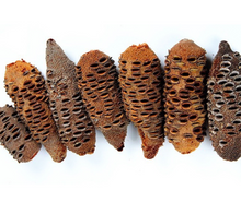 Load image into Gallery viewer, Banksia Seed Pod