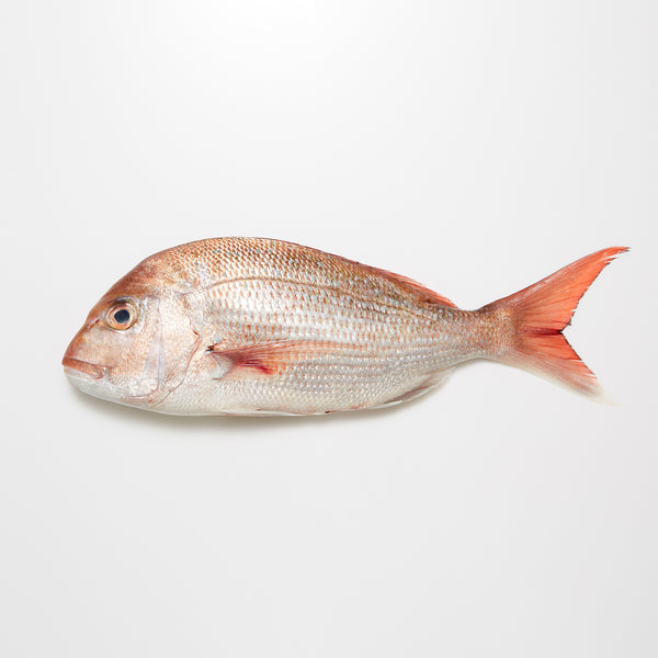 New Zealand Snapper (Sea Bream)
