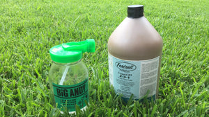 Fertilize your Lawn this Summer - it's not too late