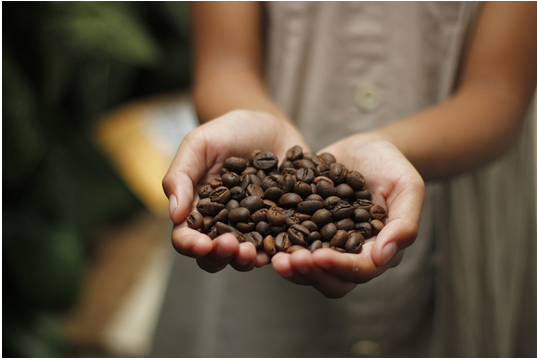 Dominican Republic Coffee Beans: Boost Your Day