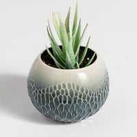NEW! Emilia Petite Pot with Mini Succulent- Saldhana