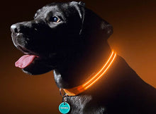 Load image into Gallery viewer, USB Charging/ Battery Powered Led Dog Collar