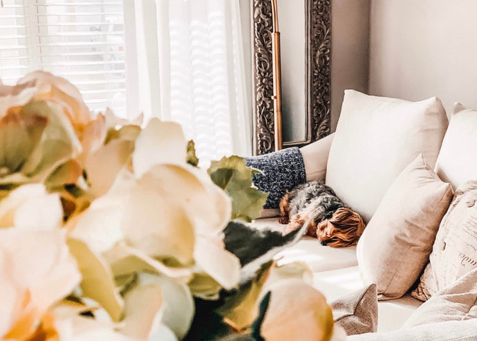 4 Simple Tips for Stylish Dog Mom Homes