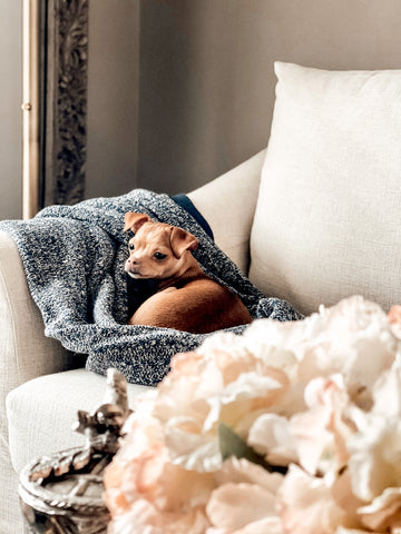 Add lots of cozy throws in high traffic pet lounging spaces to make cleaning a breeze.