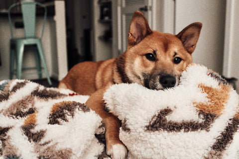 When picking day trips for your dog keep their breed in mind.  For example Shiba Inus typically do not like water.