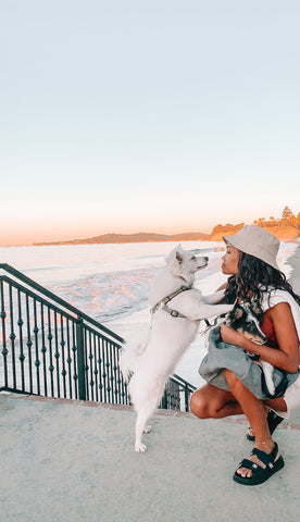 Dog moms know traveling with your dog is rewarding.  See these dog friendly day trips in Arizona, Texas, and California
