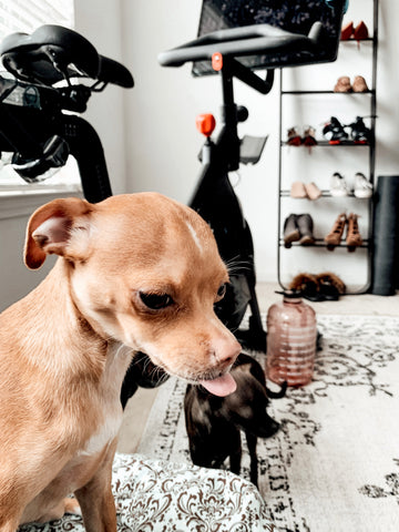 The ultimate at home workout playlist for dog moms inspired by One Peloton Cycling Bootcamps This Summer