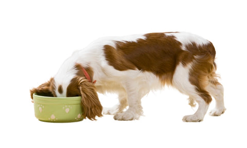 How to feed a picky dog