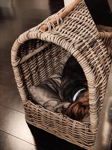 The canopy pet bed by pottery barn
