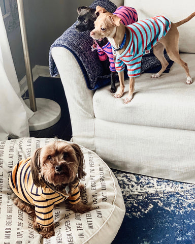 Having an older dog in the household can help littermates learn appropriate behavior and proper socialization skills.