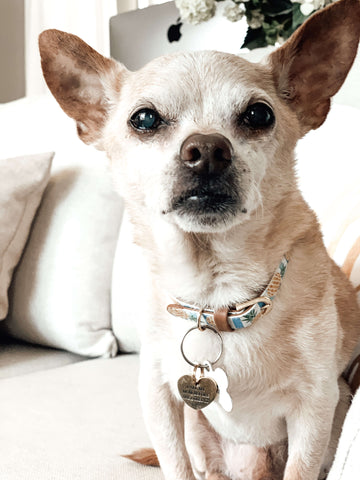 Supplements give Coco relief from his arthritis.