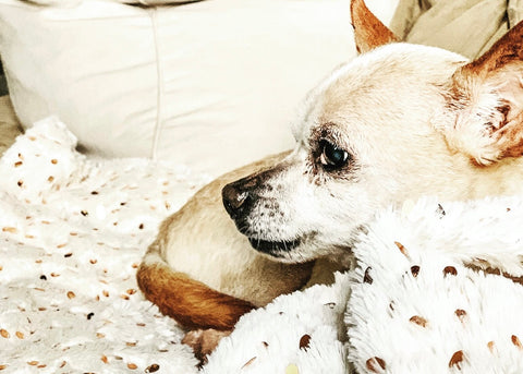 Staying calm is the key to helping get your pet the medical care he needs.