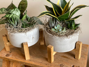 Mixed Succulent Garden in Concrete Pot with Stand