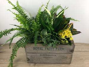 Wood Crate Indoor Planter