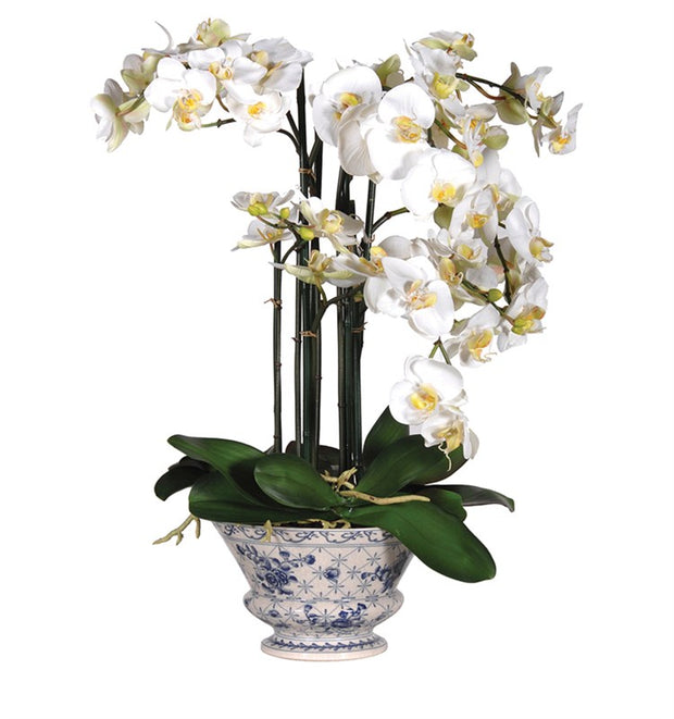 White Orchid in Blue and White Ceramic Pot