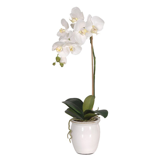 White Orchid in White Ceramic Rustic Pot