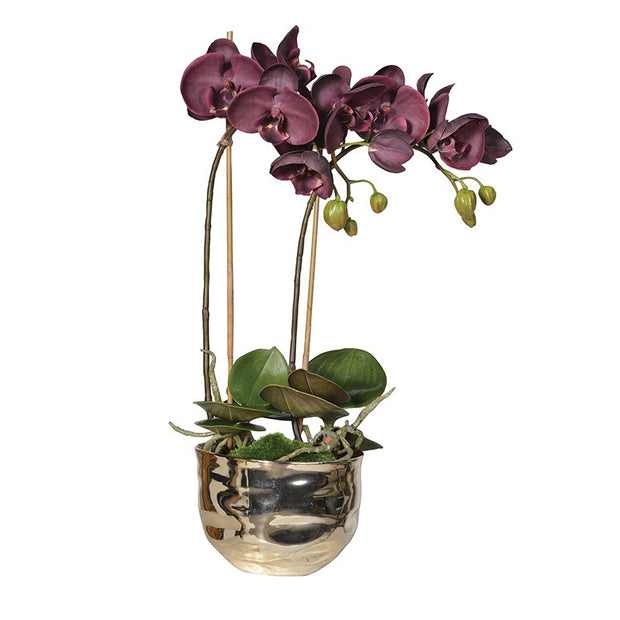 Aubergine Orchid in Gold Metal Pot