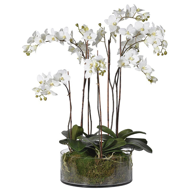White Phalaenopsis Orchid in Glass Bowl