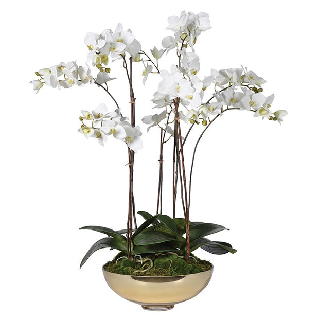 White Phalaenopsis Orchid In Gold Glass Bowl