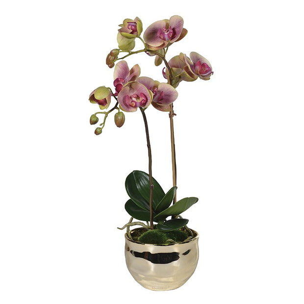 Dusky Pink and Green Orchid in Gold Metal Pot