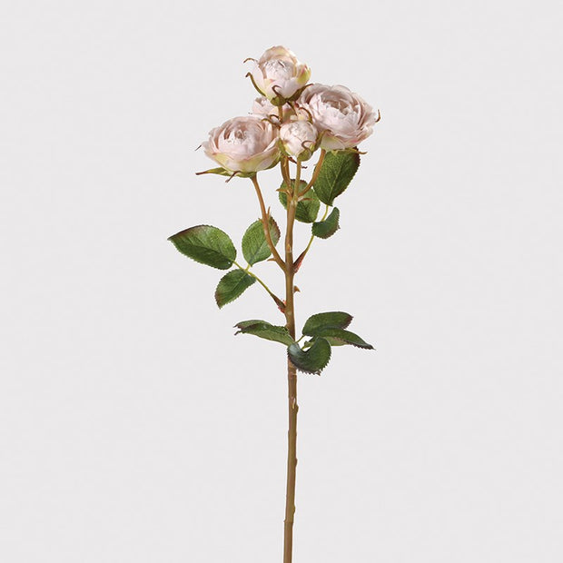 Oyster Rose Shrub Spray