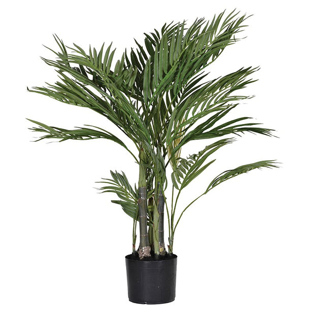 Small Areca Palm Plant