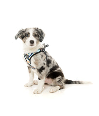 Fuzzyard Sonic Step-in Dog Harness
