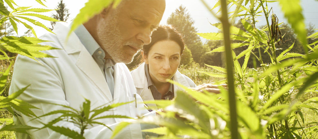 CBD oil uses and research