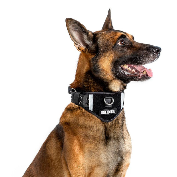 Nylon Dog Padded Collar - FLORESKYLER