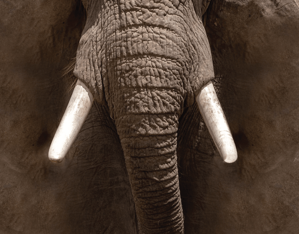 Pleated Elephant Mouth Realistic - Maskcott