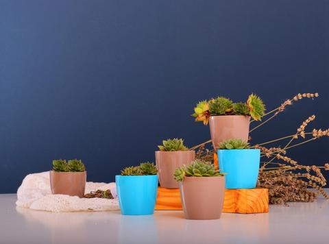 image showing midnight blue wall with various colourful, decorative accessories/ plant pots