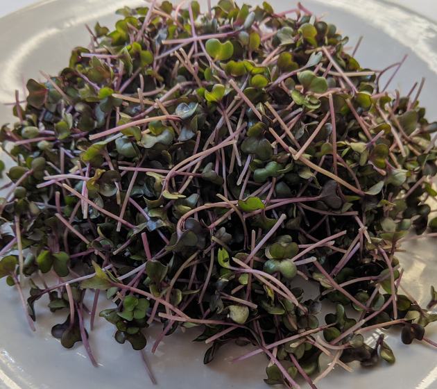 Microgreens from A State Of Plenty