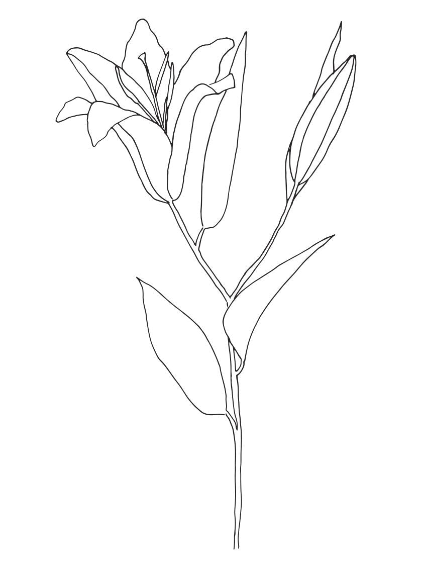 lily-line-art-flower-poster-closeup