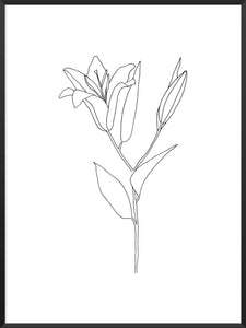lily-line-art-flower-poster-product-picture