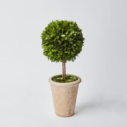 Potted Boxwood Ball